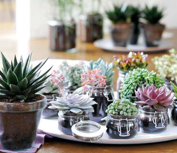 plantas-primavera-decoración (2)