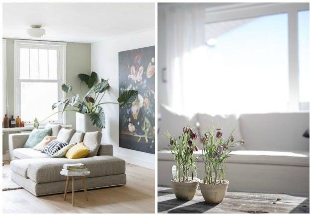 plantas-primavera-decoración (4)