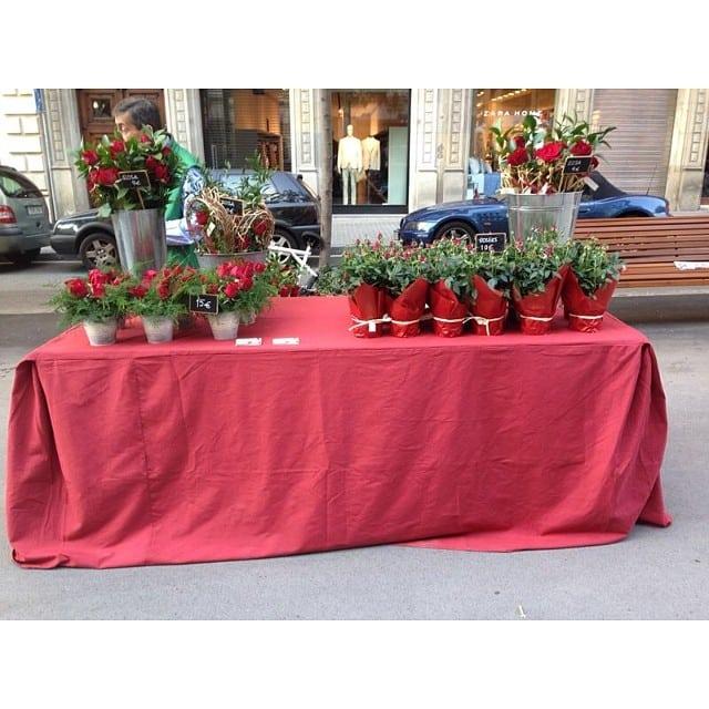 Avui la @bibsamat d'@iloftyou estarà venent roses precioses a la Rambla Catalunya 69! Passeu a saludar-la... I feliç Sant Jordi!!