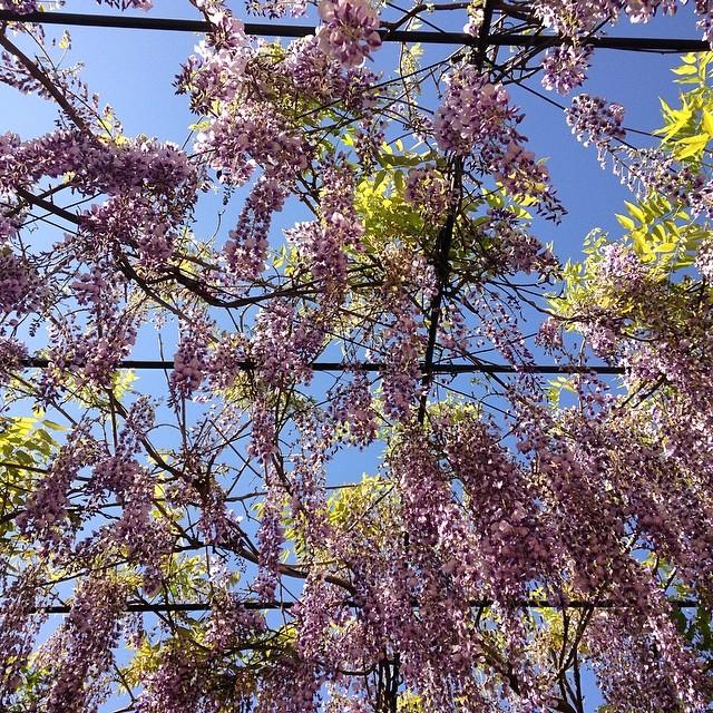 Domingo de ramos y flores